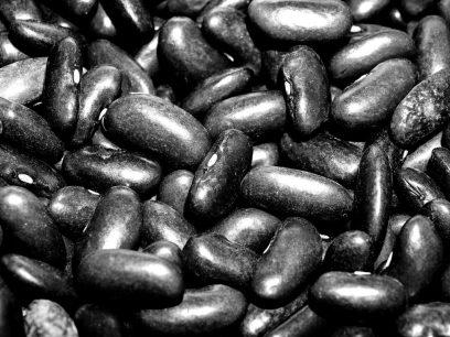 broad bean leguminous black THE BEANS: AN AMBIVALENT PLANT