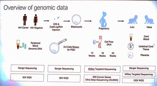 genoma humano esquema
