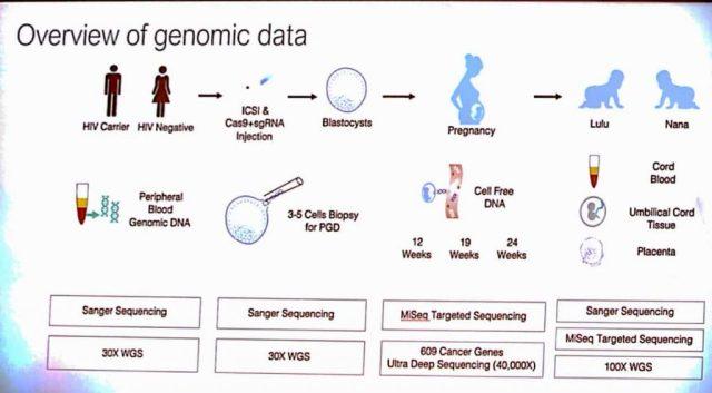 genoma umano scheda