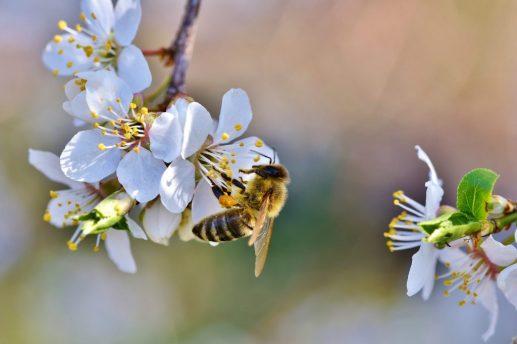 abeja flores miel PRODUCTOS NATURALES, PROBIÓTICOS Y ORGÁNICOS