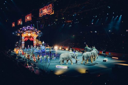 circus HOLOGRAMAS: LA MAGIA EN EL CIRCO