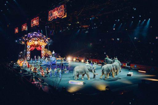 circo animali OLOGRAMMI, LA MAGIA AL CIRCO