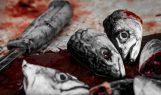 peces muertos pescado sangre