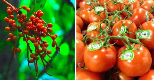 tomato origin HOW FRUITS AND VEGETABLES WERE IN THEIR ORIGINS