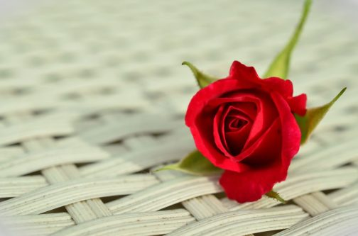 flower red romantic GUIDE TO FLIRT: HOW TO WIN A WOMAN'S HEART