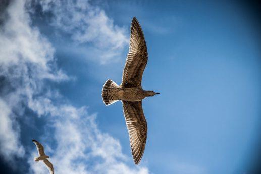 pájaro ave volar cielo libertad ES HORA DE COMENZAR A VIVIR PLENAMENTE