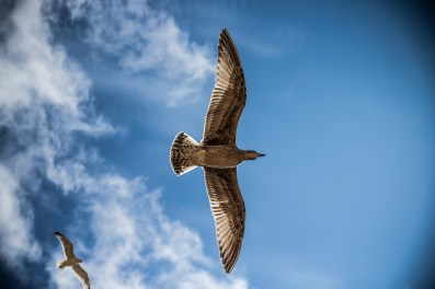 free fly bird  IT'S TIME TO START LIVING FULLY
