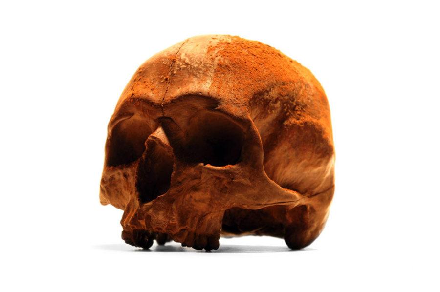 Tom's Selec - crâne en chocolat