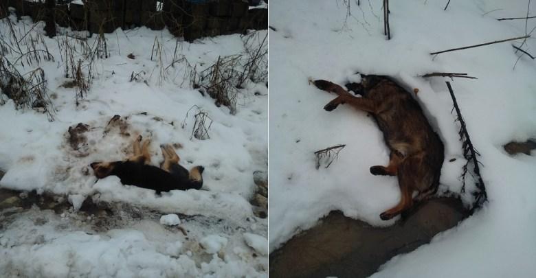 Photo of UŽAS U TOPOLOVNIKU: Otrovani psi, umirali u najtežim mukama!