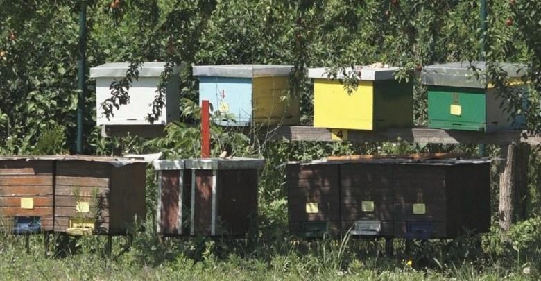 Photo of REGIONALNI PROJEKAT: Obuka za poljoprivrednike u Petrovcu na Mlavi