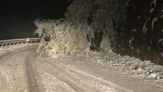 Photo of PAO SNEG U AUSTRIJI, PA NAPRAVIO HAOS: Škole zatvorene, 1.000 domaćinstava bez struje (VIDEO)