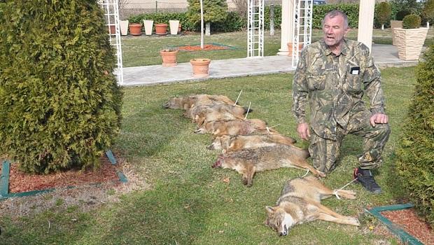 Photo of LOV NA MORAVSKOG ŠAKALA: Ustreljena šest šakala i nijedna teta Lija (FOTO)