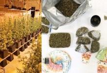 Photo of PALA ŠESTOČLANA BANDA U BEČU: Srbi gajili travu i prodavali je dilerima (FOTO)