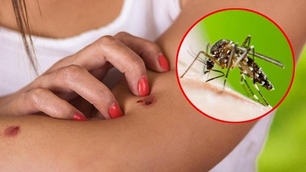 Photo of ALARMANTNO UPOZORENJE: Pojavili se zaraženi komarci na Srebrnom jezeru, Velikom Gradištu i Golupcu