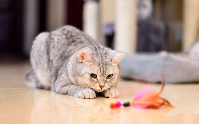 Causas por las que tu gato puede estar triste