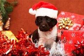 Regalos para perritos en Navidad