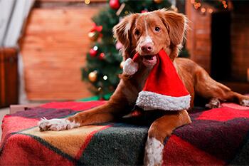 Alimentos navideños que son malos para tu perro