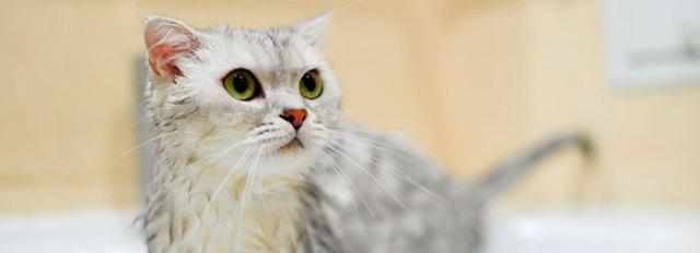 ¿Cada cuánto tiempo debo cepillar y bañar a mi gato?