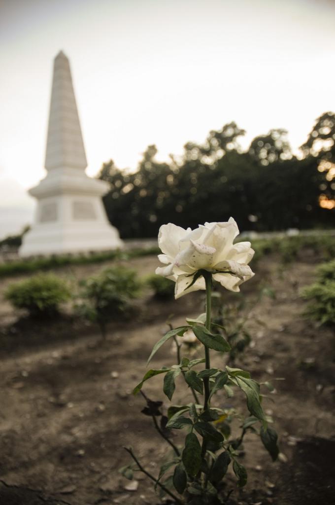 Cultivo una rosa blanca/ en junio como en enero/ para el amigo sincero/ que me da su mano franca. | foto: René Pérez Massola