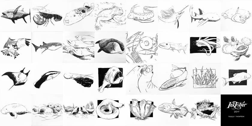 31 ink drawings of marine life