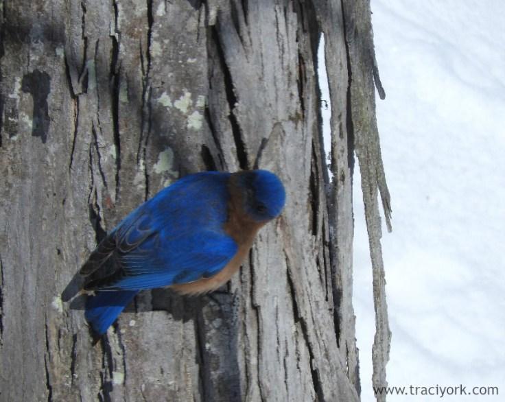 Bluebird of grumpiness
