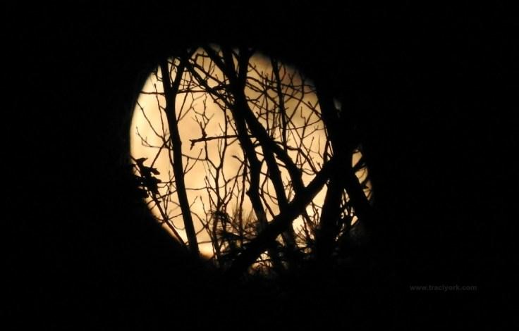 Moonrise, three nights past full