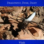 Dragonfly, Dusk, Daisy