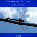 Dragonflies, Daylilies, and Daisies blog graphic