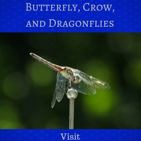 Butterfly, Crow, and Dragonflies Blog Graphic