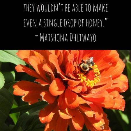 Bee Quotos - Matshona Dhliwayo quote