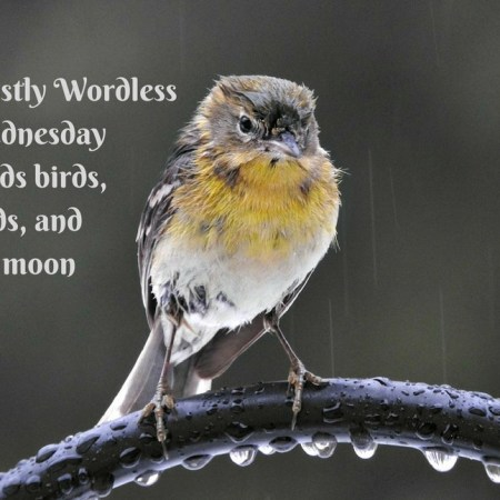 Mostly Wordless Wednesday Birds and Moon