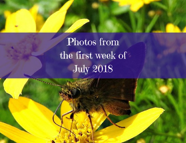 Photos from the first week of July 2018
