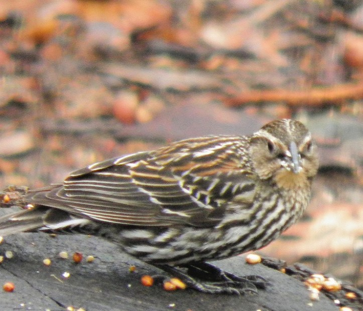 Throwback Thursday - Sparrows, sparrows, and more sparrows blog thumbnail