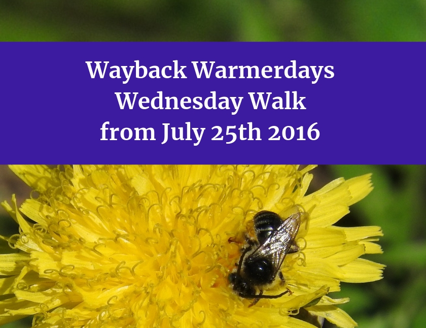 Wayback Warmerdays Wednesday Walk from July 25th 2016 blog thumbnail