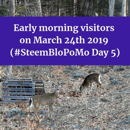 Early morning visitors on March 24th 2019 SteemBloPoMo Day 5 blog thumbnail