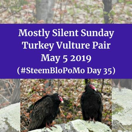 Mostly Silent Sunday - Turkey Vulture Pair blog thumbnail