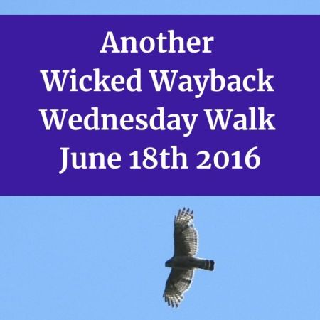 Another Wicked Wayback Wednesday Walk from June 18th 2016 blog thumbnail