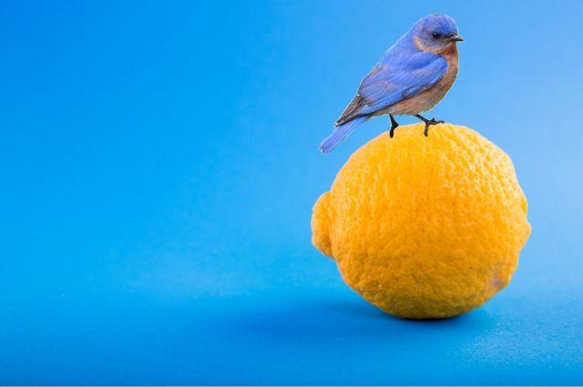 Four Funky Blue Bird Fantasy Fotos
