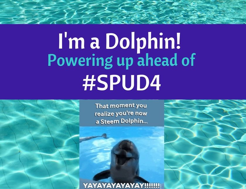 I'm a Dolphin - Powering up ahead of SPUD4 blog thumbnail