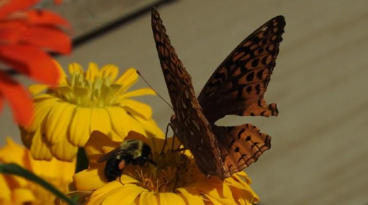 13 Different Butterflies