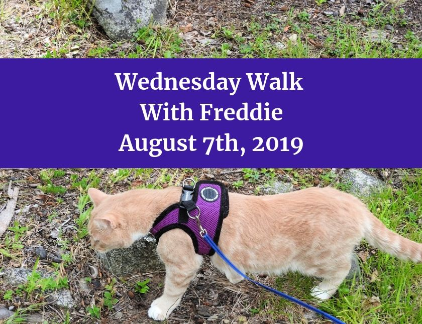 Wednesday Walk With Freddie August 7th, 2019 blog thumbnail