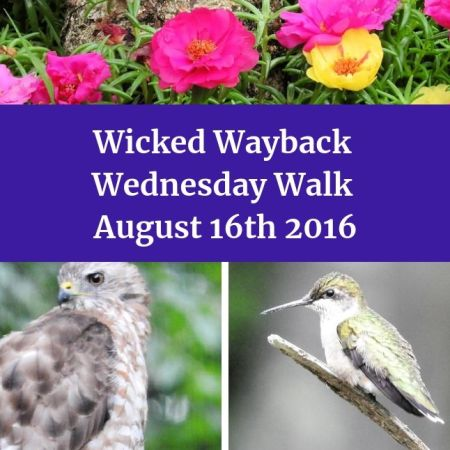 Wednesday Walk August 16th 2016