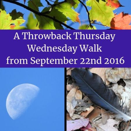 A Throwback Thursday Wednesday Walk from September 22nd 2016 blog thumbnail