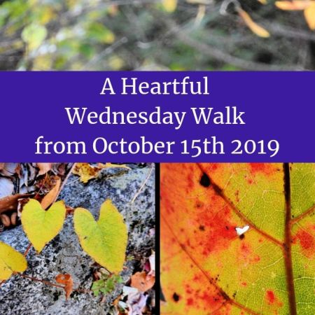 A Heartful Wednesday Walk from October 15th 2019 blog thumbnail