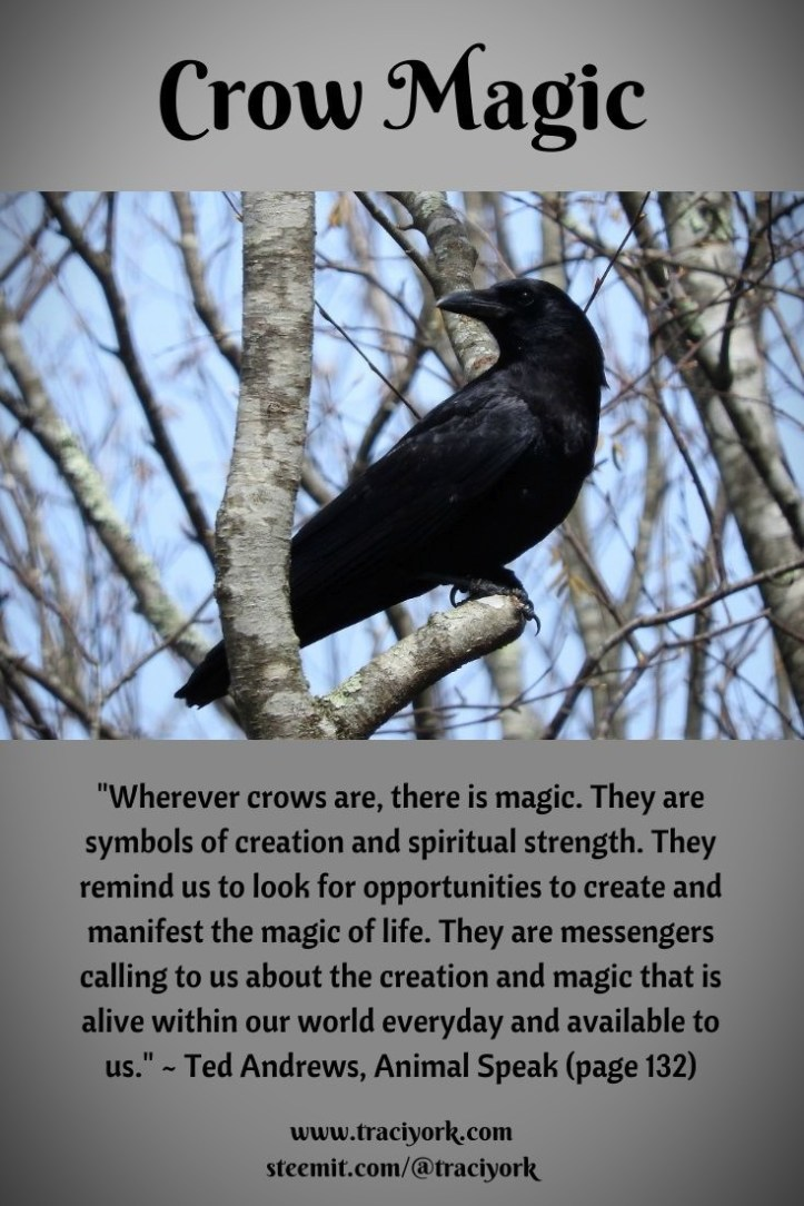 Crow Magic, Ted Andrews Quote 2019