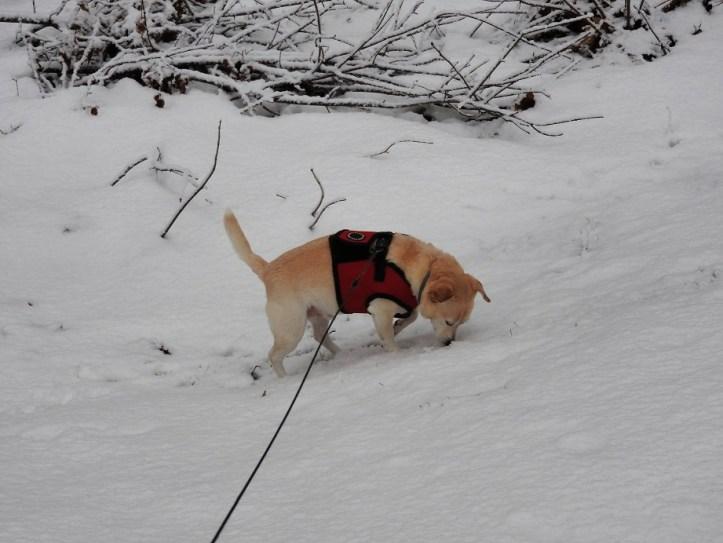 Wednesday Walk with Sandy