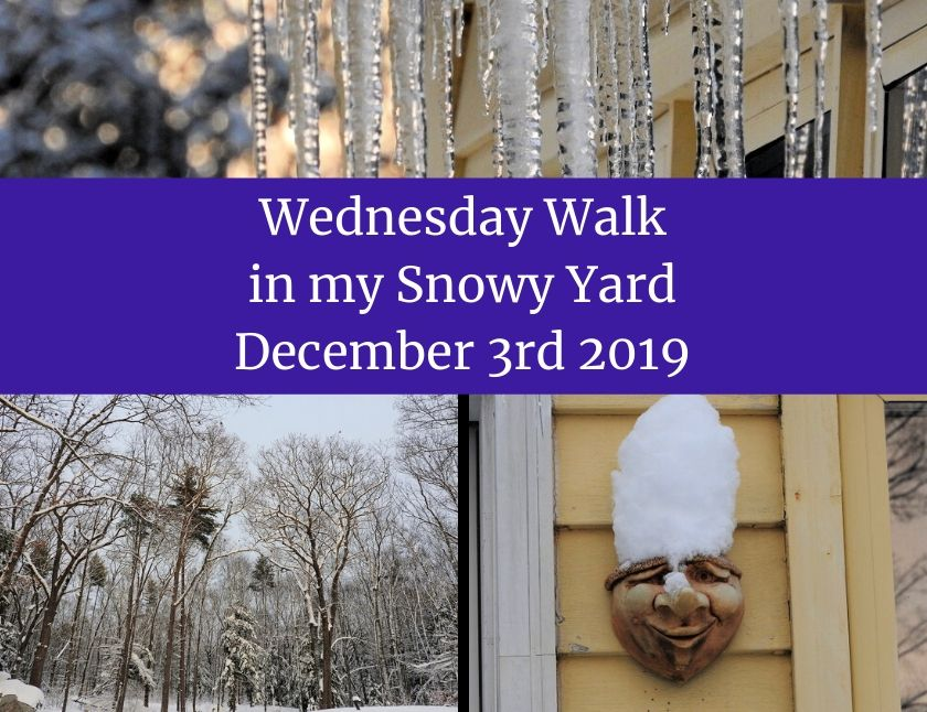 Wednesday Walk in my Snowy Yard, December 3rd 2019 blog thumbnail