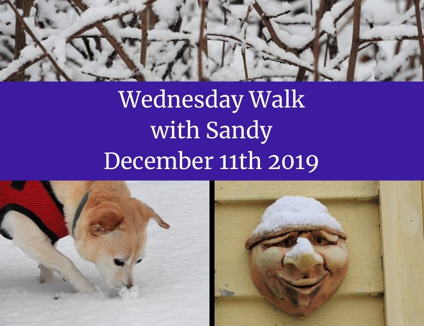 Wednesday Walk with Sandy December 11th 2019 blog thumbnail