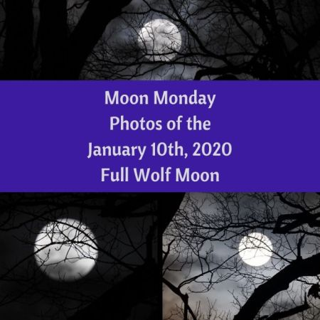 Moon Monday - Photos of the January 10th Full Wolf Moon blog thumbnail