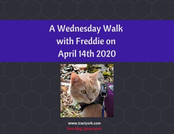 A Wednesday Walk with Freddie on April 14th 2020 blog thumbnail